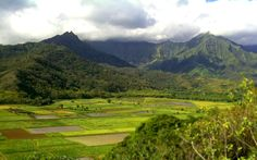 Hanalei Valley on Kauai (this is one of the many reasons my grandparents fell in love with this island)!