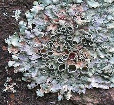 pastel hues, lichen