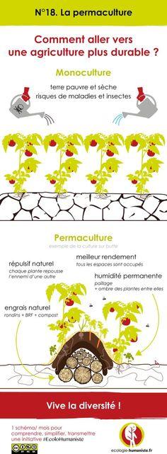 Découvrez ici une infographie pour tout comprendre sur la permaculture ! Qu'est ce que la permaculture ? Pourquoi est-ce une forme d'agriculture durable ?