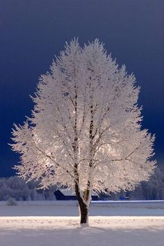 Snow Tree, Stockholm. FREEZING RAIN & FOG settles in and everything starts to look like a white winter wonderland.