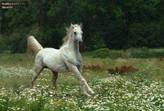 FOHLEN | صور خيول روعه للتحميل صور جميلة رائعة ...