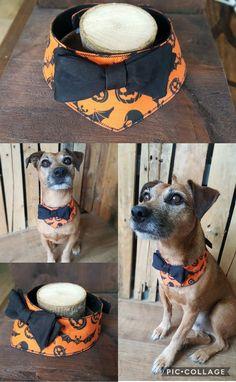 Halloween dog bandana costume Dog Line Art, Diy Dog Costumes, Bandanas, Dog Wear, Pumpkin Costume, Dog Bandana, Dog Bowtie, Pet Portraits, Dog Accessories