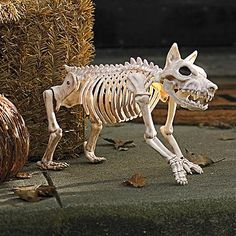 Sparky the Skeleton Dog on Leash. Thrill them to the bone with frightfully realistic Skeleton Dogs on Leashes Halloween figures. Allow our chilling canines to stand guard by the bowl of treats.  A Grandin Road exclusive.