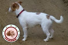 Side view of Peritas, the JARSSE jrt, with dirt background