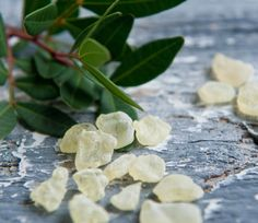 Mastic Gum Mastiha Masticha Large Fresh Natural Tears of Greek Chios Island Mastic Gum, Chios Greece, Kai, The Kitchen Food Network, Homemade Liquor, Simple Minds, Greek Recipes, Sugar And Spice, Health