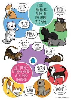 Most Languages Agree on the Sound Cats Make
