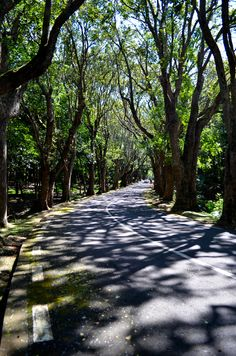 The Road of Lights and Shadows | Mauritius
