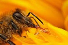 تبدیل شهد به عسل ـ قسمت سوم ـ تبدیل شهد