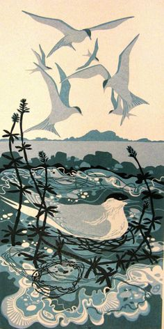 Liz Myhill: New linocut2014  The terns were inspired by a trip to the Isle of May nature reserve earlier in the year and the experience of being mobbed as we made our way up through the nesting site away from the jetty.