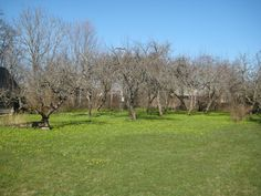 Apple orchard in early spring Apple Orchard, Early Spring, Countryside, Nature, Plants, Beginning Of Spring, Naturaleza, Plant, Natural