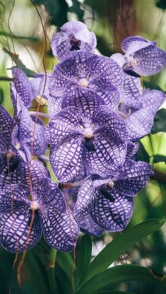 orchid_purple_striped_exotic_sharpness_58173_640x1136 | Flickr - Photo Sharing!