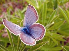 Low-key group champions butterfly (Xerces Society)
