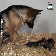 Cute Little Animals, Cute Funny Animals, Funny Dogs, Cute Cats, Mother And Baby Animals, Funny Memes, Cute Animal Videos, Cute Animal Pictures, Animals Beautiful