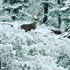 """Yesterday was """"grin and BEAR it Sunday,"""" today must be """"oh DEER it's Monday""""! #hiketahoe #inclinevillage #realestateagent #littlemarysunshinerealestate #laketahoe"""
