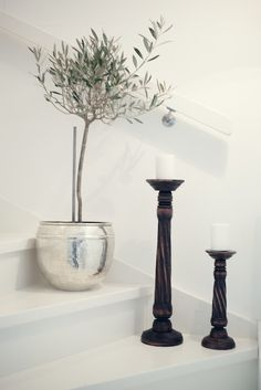 Olive Tree The Perfect Plant To Add Whimsy Simple Greenery Indoor