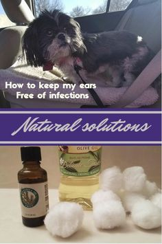 Dogs can often get ear infections.  To prevent or heal that problem you can use 1-2 drops of T36-C5 Pure Tea Tree oil mixed with 2 tsp olive oil.  Apply 1 or 2 drops to each ear, using a cotton swab.