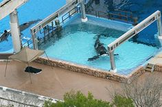 A 12,300-lb. killer whale named Tilikum fatally attacked his 40-year-old SeaWorld Orlando trainer Dawn Brancheau, dragging her underwater during a live performance.