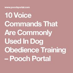 10 Voice Commands That Are Commonly Used In Dog Obedience Training – Pooch Portal #DogObedienceTipsandAdvice