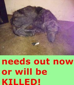 PLEASE HELP! This poor dog is in a home with deplorable conditions. We have treated her for mange over and over, but still she looks horrible. It is probably the environment. BARC will pay all vetting if someone can help. She is in Waynesville, Ga. My email is sosfordogs@gmail.com https://www.facebook.com/photo.php?fbid=10203558256256708&set=a.1040074521811.2007302.1223975447&type=1