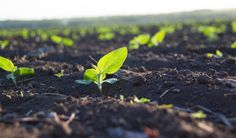 Is Healthy Soil the Low-Tech Solution to Climate Change?