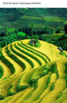 Rice terraces, Yuangyang, Vietnam