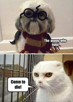 I couldn't resist. This is hysterical! I read it in a Voldemort voice too...