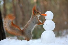 Photographer Captures a Cute Squirrel Photo Shoot
