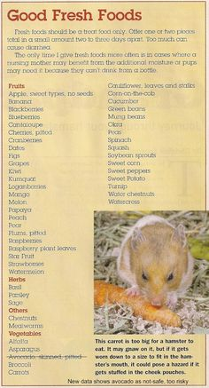 hamster-safe-foods.jpg (796×1474)