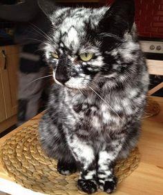 White and black cat coat - Imgur