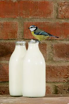 childhood milk doorstep - one enterprising blue tit learned how to peck open the tinfoil bottle top, then told all it's mates. 1970s Childhood, My Childhood Memories, Nostalgia, Blue Tit, I Remember When, My Memory, The Good Old Days, Retro, The Past