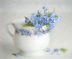 Forget-me-not - Forget-me-not in grandmas Mug :-) digital art / texture work