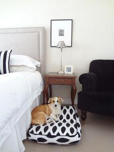 black, white, rich brown ROOM DOG