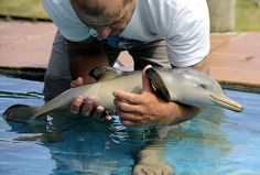 Art Dolphins are so cute! Especially baby dolphins pets-animals-and-the-bizarre Cute Animal Photos, Cute Animal Videos, Animal Pictures, Baby Pictures, Cute Creatures, Beautiful Creatures, Animals Beautiful, Animals Amazing, Magical Creatures