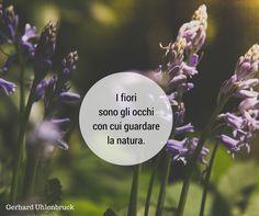 Quote by Gerard Uhlenbrock #quotes #quote #aforismi #nature #natura #flowers #citazioni #naturequotes #Gerard #Uhlenbrock #GerardUhlenbrock