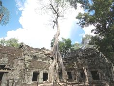 Ta Prohm, the Tomb Raider temple, 7 Wonders of Angkor Wat, Cambodia