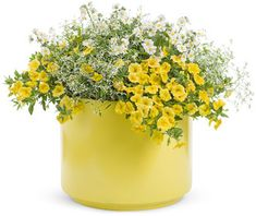 Proven Winners - Just add color - Yellow combination container recipe containing Superbells® Yellow - Calibrachoa hybrid, Diamond Frost® - Euphorbia hybrid. Container Flowers, Flower Planters, Container Plants, Container Gardening, Flower Pots, Outdoor Pots, Outdoor Flowers, Fall Flowers, Yellow Flowers