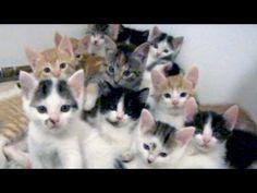 So Many Kitten Stares! video