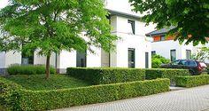 http://www.tuindesign-ten-horn.nl Tuinarchitect - tuinontwerp. Moderne strakke eigentijdse voortuin met hoogteverschillen in Limburg. Onderhoudsvriendelijk.