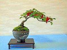 Minicik bonsai :)