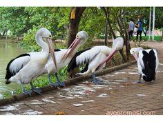 Kebun binatang Mangkang #ayopromosi #gratis http://www.ayopromosi.com/