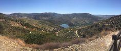 Fazenda de uvas p vinhos