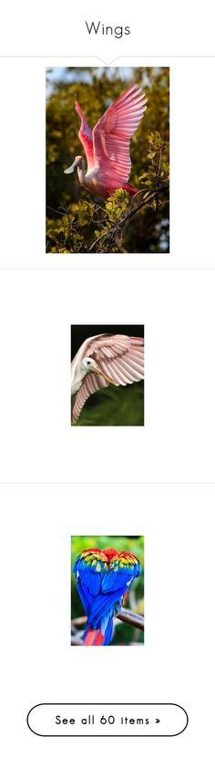 """Wings"" by amy-jean ❤ liked on Polyvore featuring birds, pictures, dresses, pink, pink chiffon dress, pleated chiffon dress, pleated dresses, stella mccartney dresses, chiffon dress and gowns"