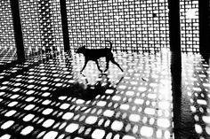Christopher Anderson is a photographer and member of the Magnum Photos agency Christopher Anderson, Chris Anderson, Monochrome Photography, Black And White Photography, Street Photography, Inspiring Photography, Yamaguchi, Magnum Photos, Photografy Art