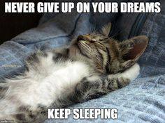 #never give up on your #dreams keep #sleeping #LetsGetWordy