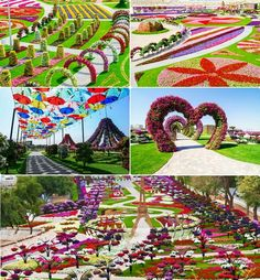 Dubai Miracle Garden - I wanna go here soooo bad !