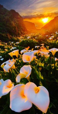 Amazing Nature Scenery / Calla Lily Valley in the Big Sur of California Beautiful World, Beautiful Places, Beautiful Pictures, Hello Beautiful, Beautiful Sunset, Beautiful Babies, Composition Photo, Natural Scenery, Calla Lily