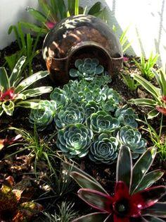 blue grey echeverias and bromeliads