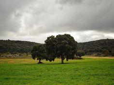 Verde que te quiero verde   Green much green  Praderas cerca de Ruidera Ciudad Real #nature #photography