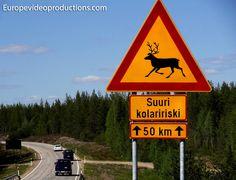 Advertencia renos: señal de tráfico de cruce de renos en Laponia, en el norte de Finlandia