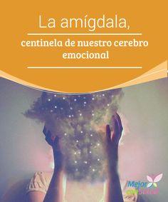 """La amígdala, centinela de nuestro cerebro emocional  Cuando desde la neurociencia hablamos de """"la amígdala"""" estamos haciendo referencia a una estructura cerebral subcortical que es, precisamente, uno de los centros emocionales de nuestro cerebro."""
